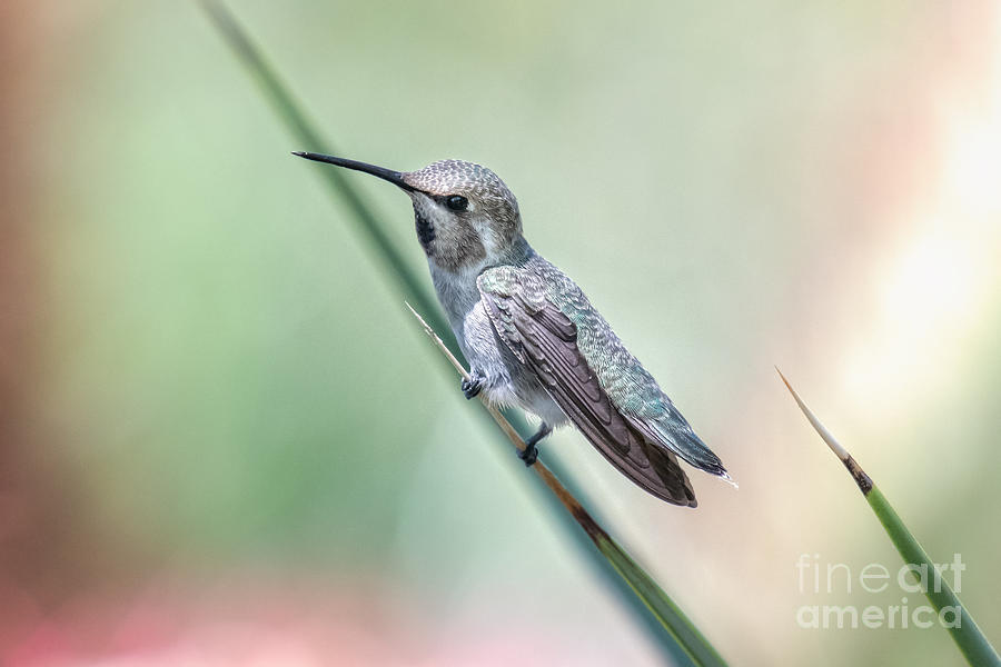 Hummingbird on a Frond by Lisa Manifold