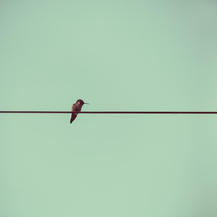 Hummingbird On A Wire Photograph by (c) Maite Pons