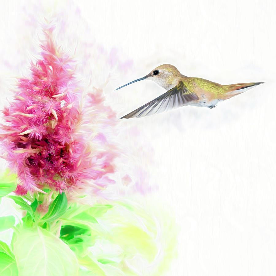 Hummingbird Pastels by Scott Bourne