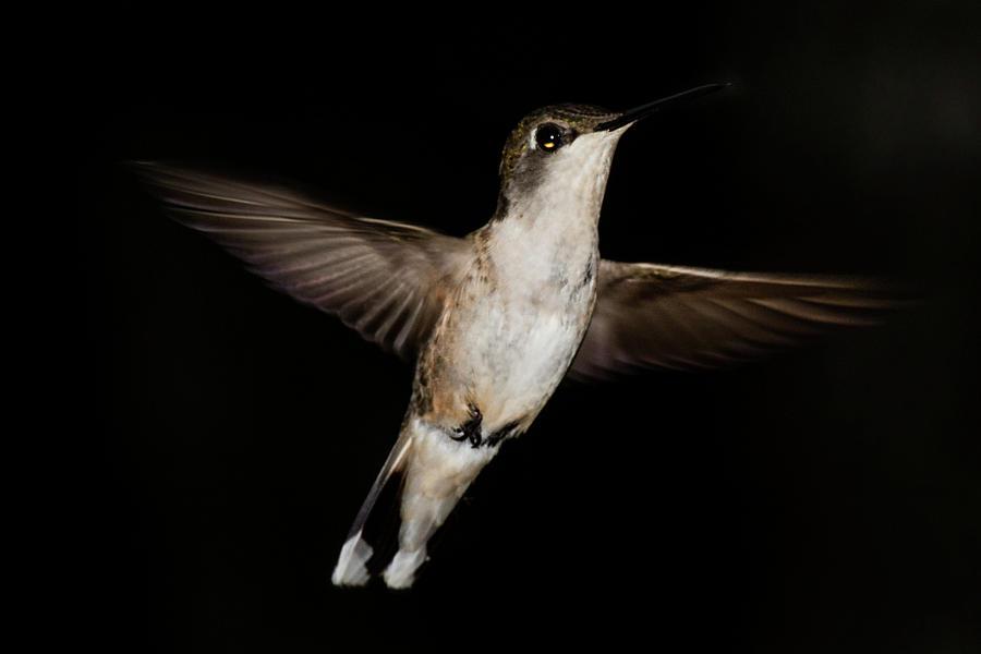 Hummingbird Pose by Douglas Tate