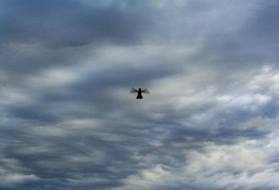 Hummingbird Silouette by Anthony Jones
