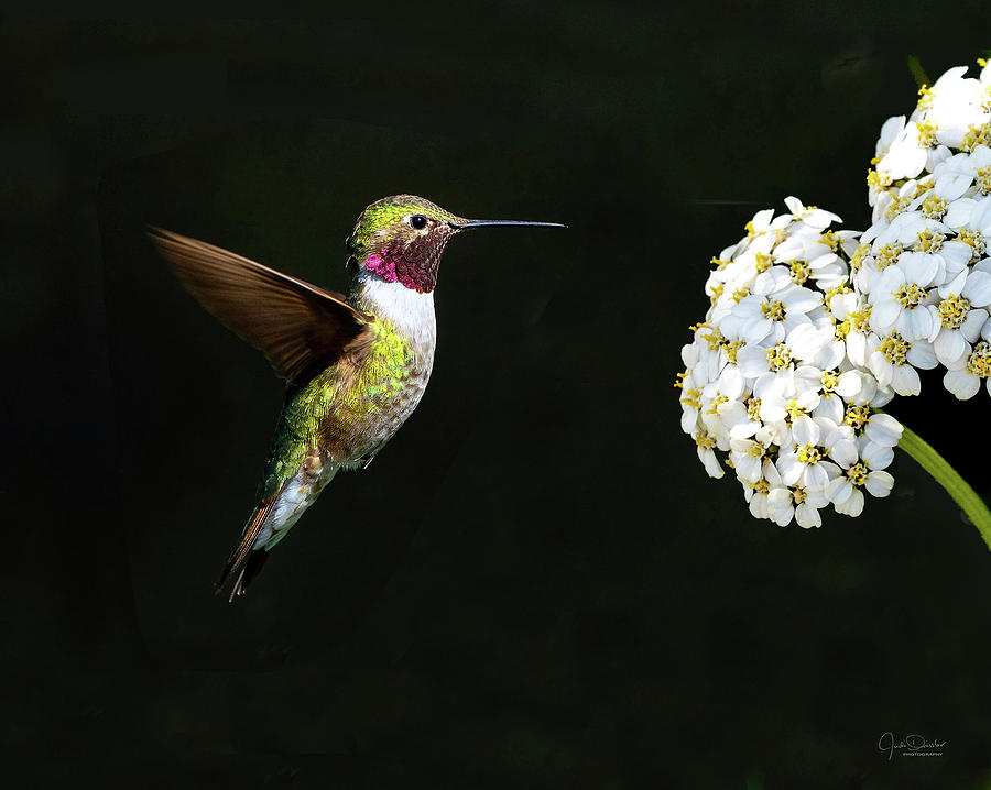 Hummingbird with Flower by Judi Dressler