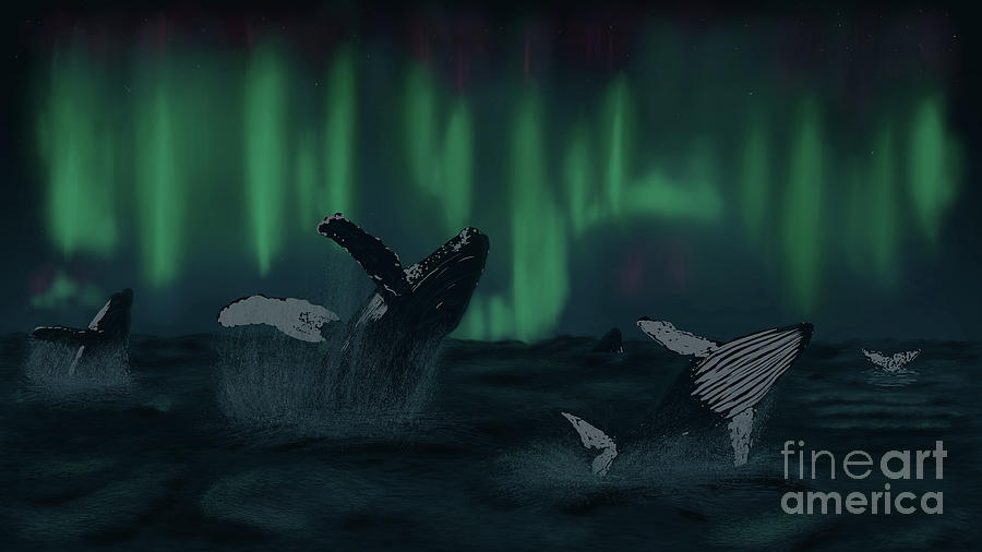 Humpback Whales Dancing under Auroras by the Ford Family
