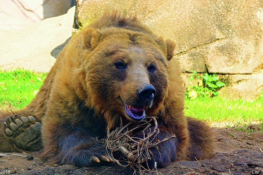 Hungry Bear by Lisa Wooten
