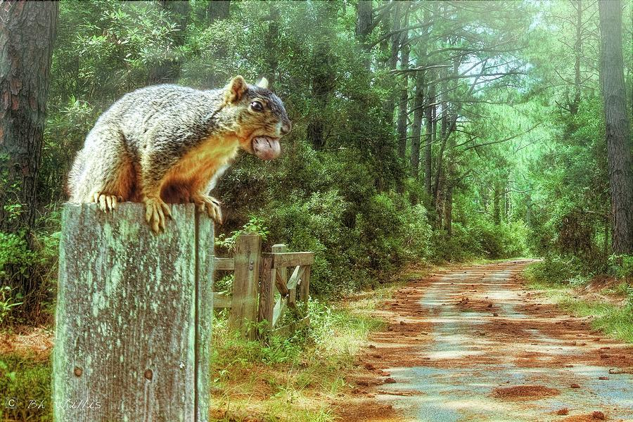 Hungry Squirrel by Bonnie Willis