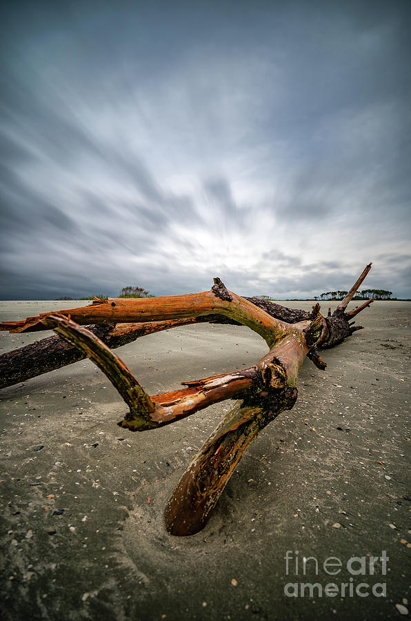 Hurricane Florence Beach Log - portrait by David Smith