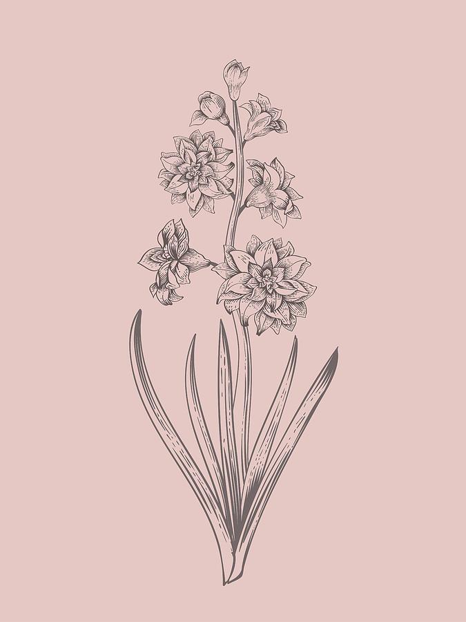 Hyacinth Mixed Media - Hyacinth Blush Pink Flower by Naxart Studio