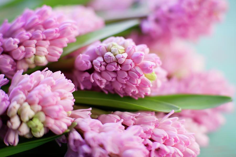 Hyacinth Bunch Photograph by Jim Franco