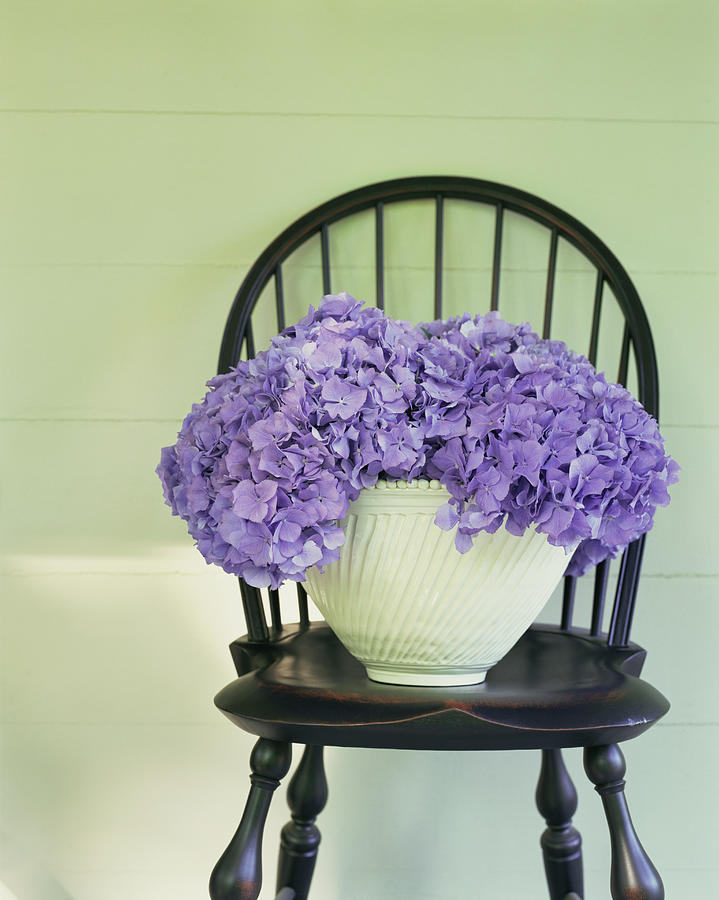 Hydrangea Floral Arrangement On Chair Photograph by Ngoc Minh Ngo