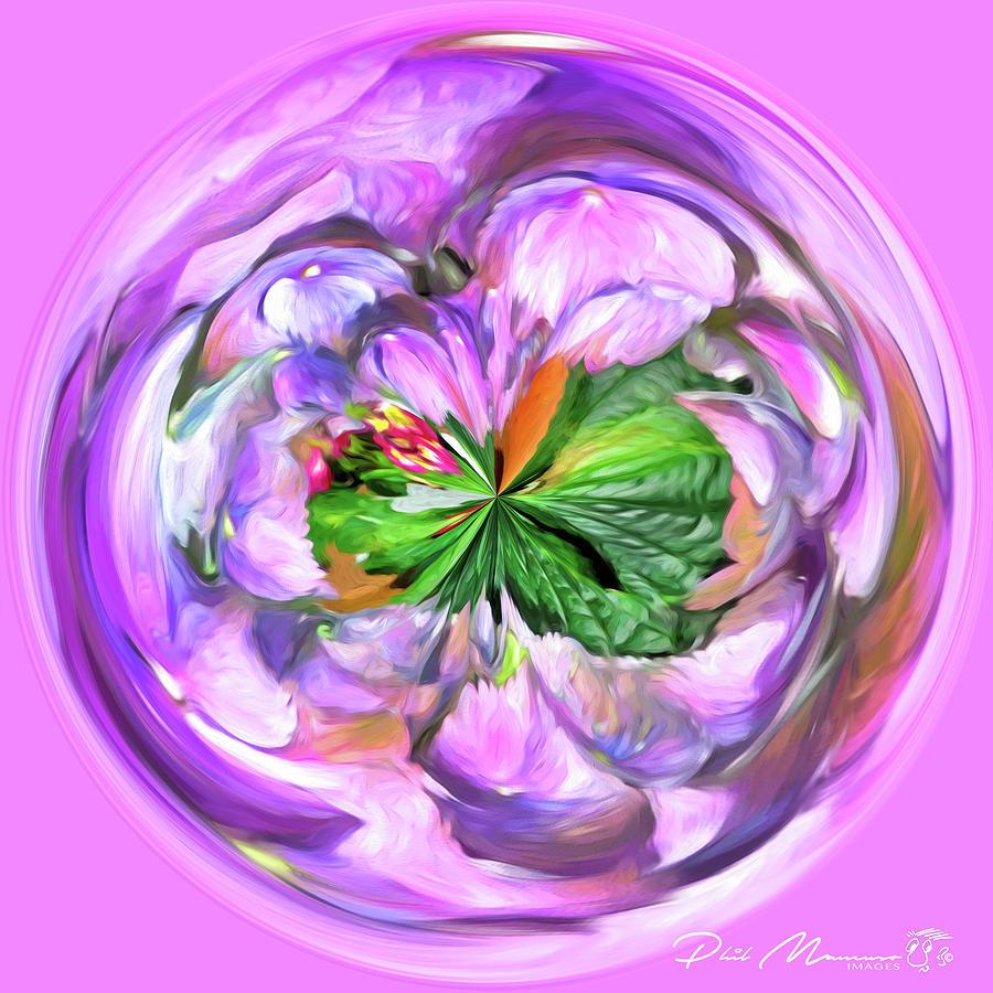 Hydrangea Hijinks by Phil Mancuso