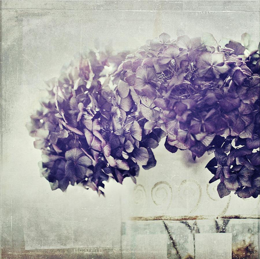 Hydrangea In Vase Photograph by Silvia Otten-nattkamp Photography