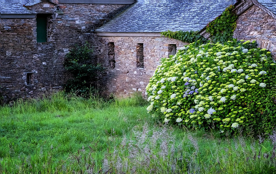 Hydrangeas And Stone House by Tom Singleton
