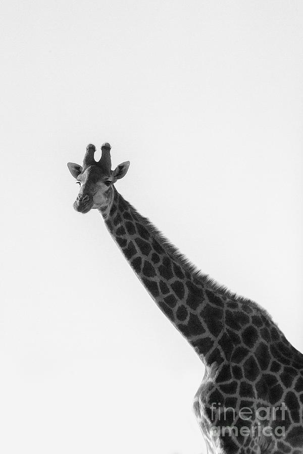 I am a giraffe by Patricia Hofmeester