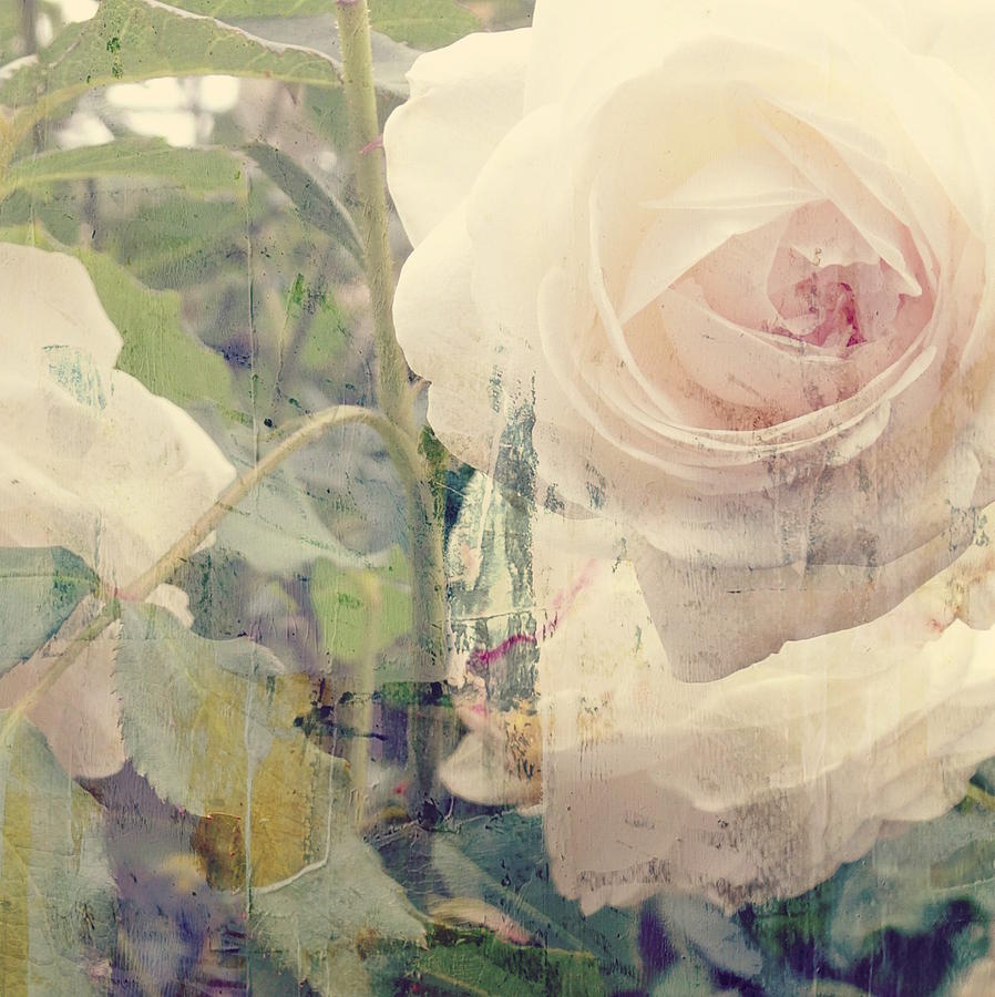 White Rose Mixed Media - I Cant Stop Loving You  by Paul Lovering