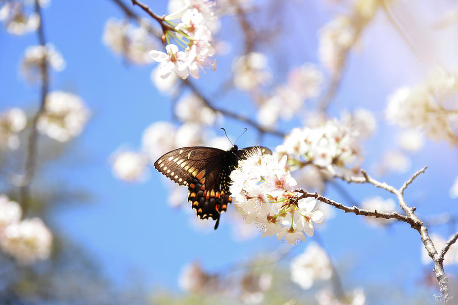 Butterfly Photograph - I Found Spring by Alicia R Paparo