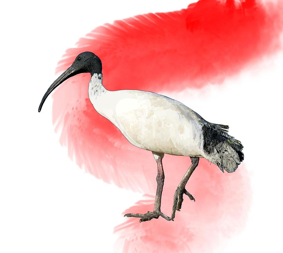 Stratton Digital Art - I Is For Ibis by Joan Stratton