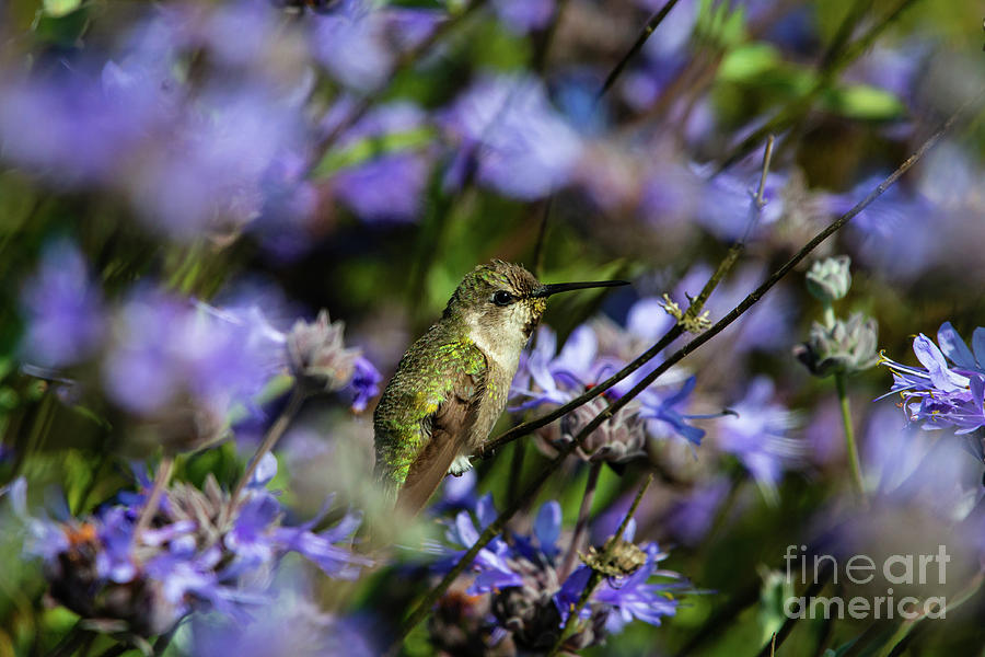 Animals Photograph - I See You by Michael Vance Pemberton