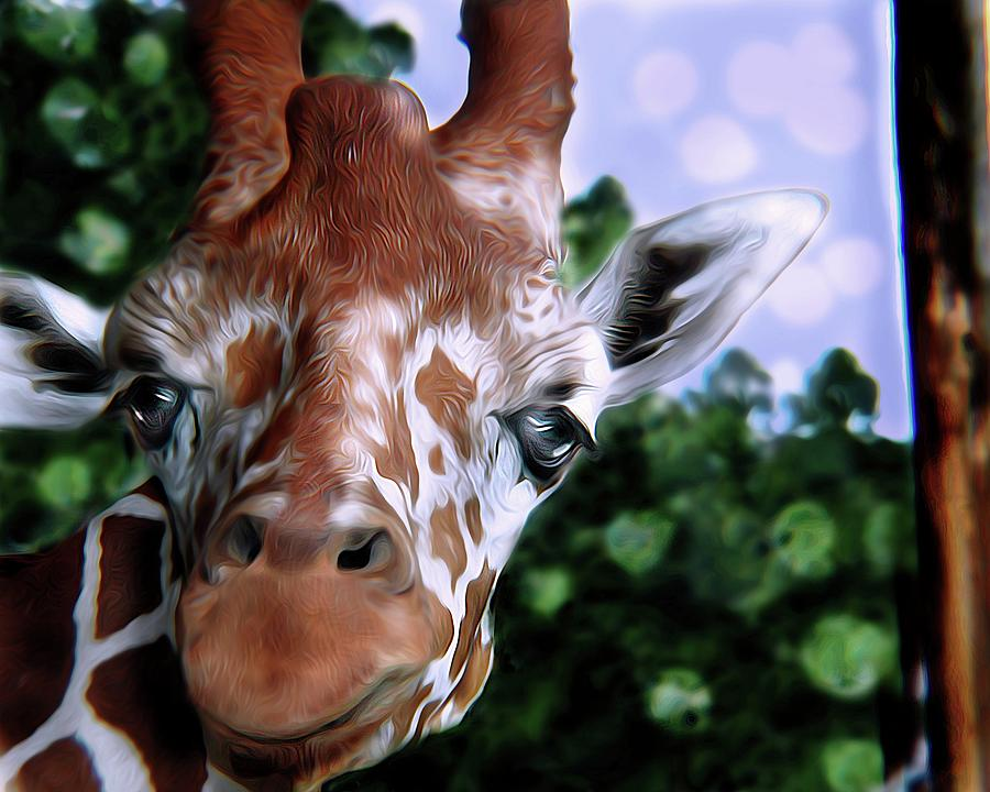 Animals Digital Art - I see you Peekaboo Giraffe by Christina M Hale