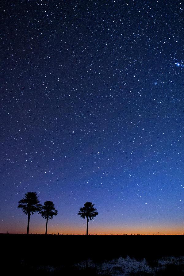 Ibera Wetland Palms And Night Sky Photograph by Sebastian Kennerknecht