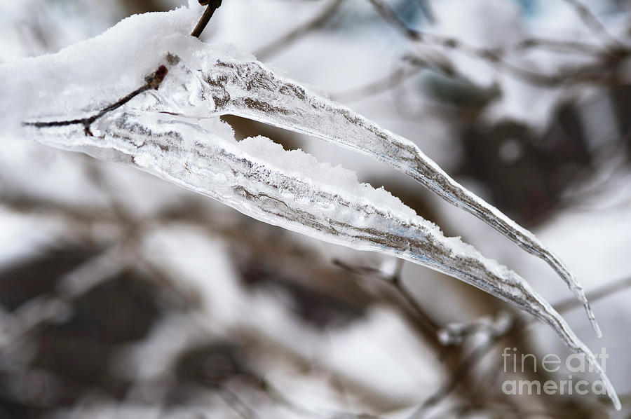Ice Pterodactyl Photograph