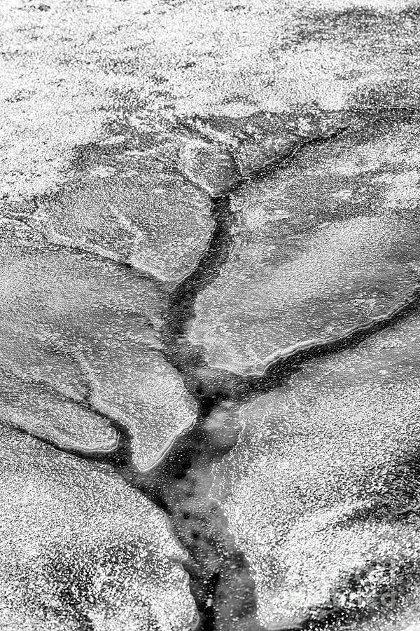 Ice Tree  by Thomas R Fletcher