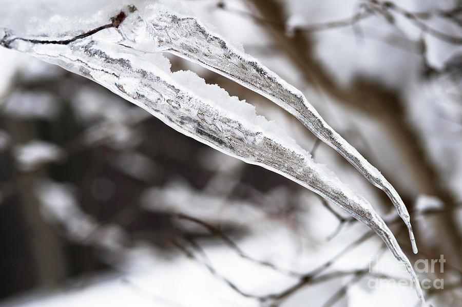 Iced Pterodactyl Photograph
