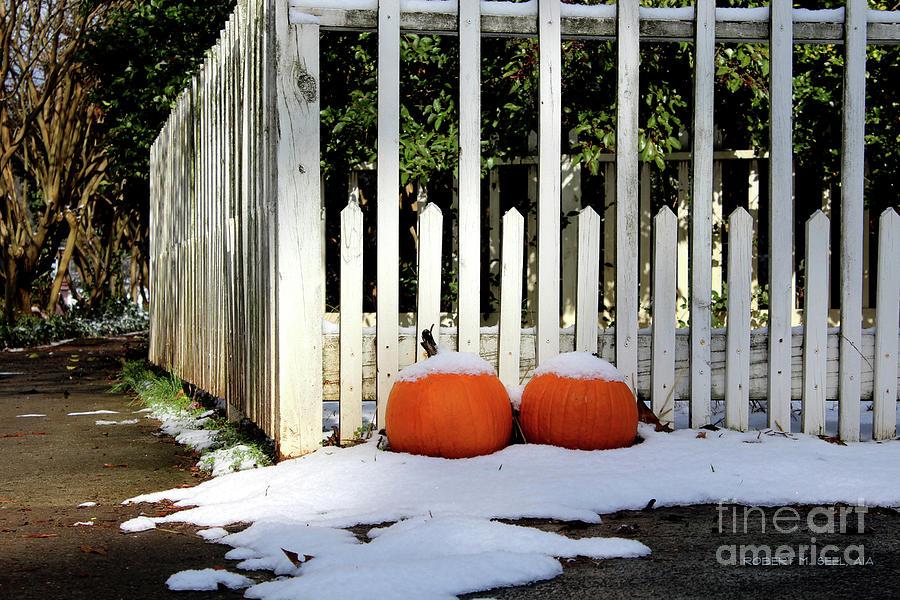 Iced Pumpkins by Robert M Seel