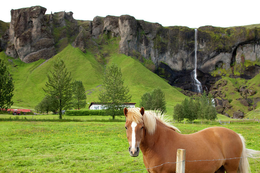 Icelandic Horse And Waterfall, Vik Photograph by Paul Souders
