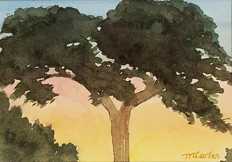 Iconic Montecito Cypress by M Carlen