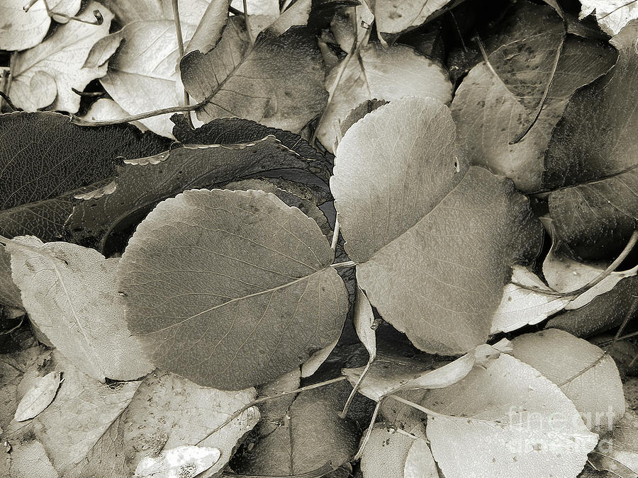 ICY LEAVES by Andee Design