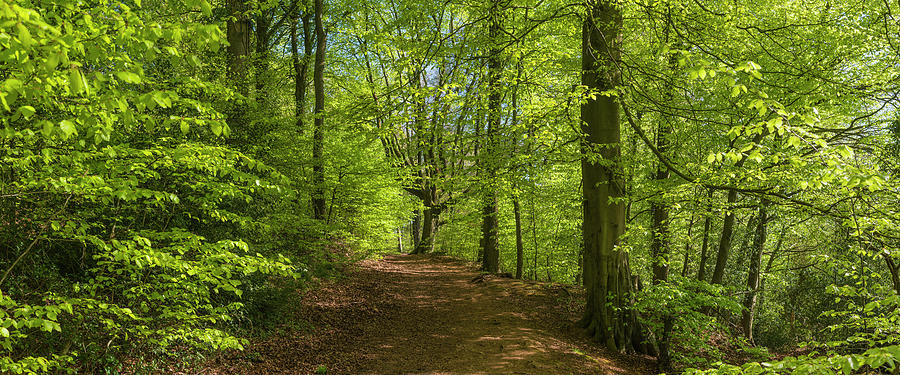 Idyllic Trail Through Vibrant Green Photograph by Fotovoyager