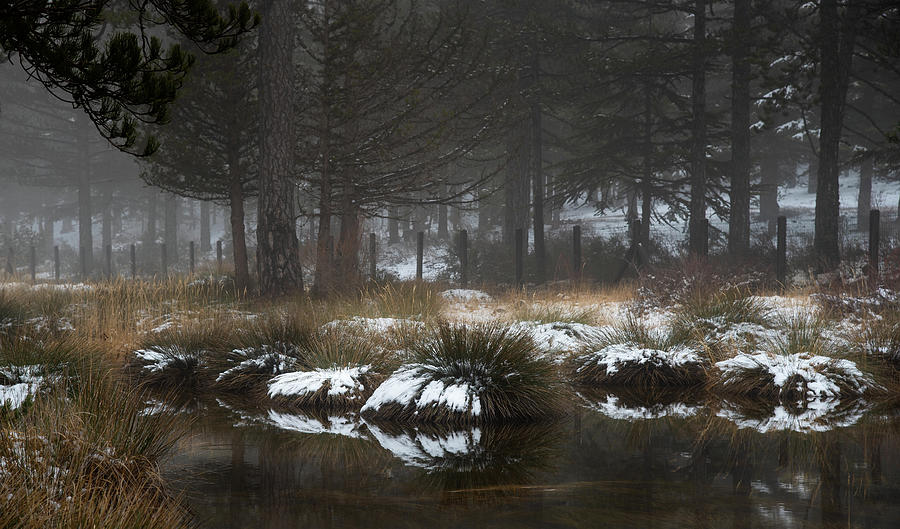 Idyllic Winter landscape with a frozen lake at Troodos Mountai by Michalakis Ppalis