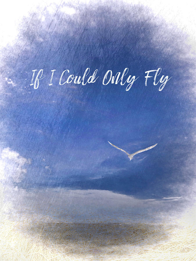 If I Could Only Fly by Jack Wilson
