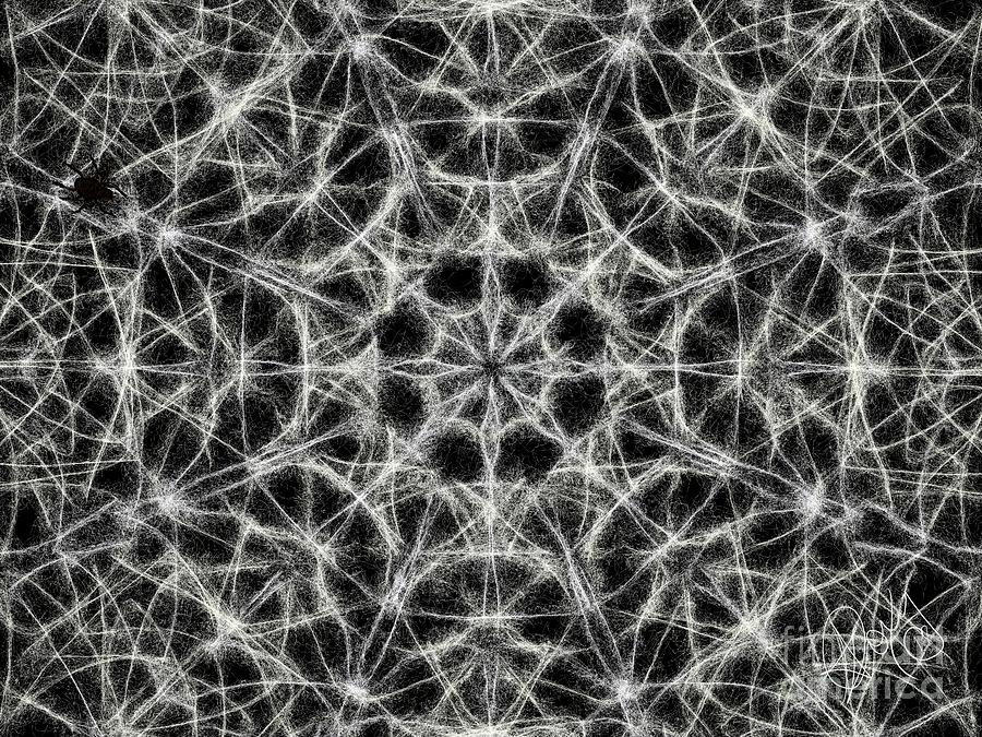 If I Were A Spider - Web Fantasy Kaleidoscope by Roxy Riou