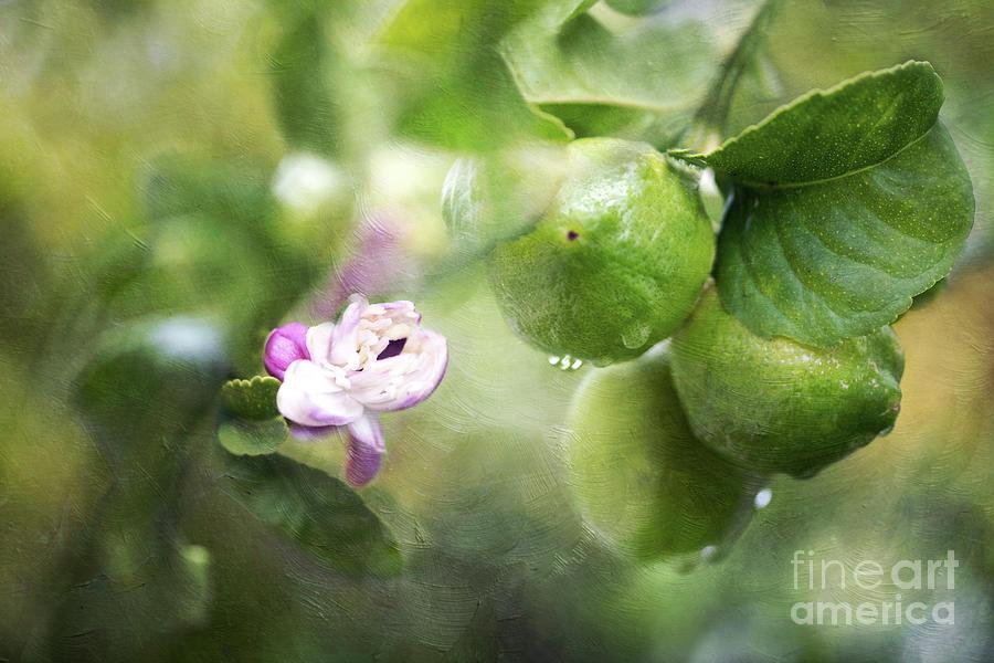 Lemon Mixed Media - If life hands you lemons, make lemonade by Maria Ismanah Schulze-Vorberg