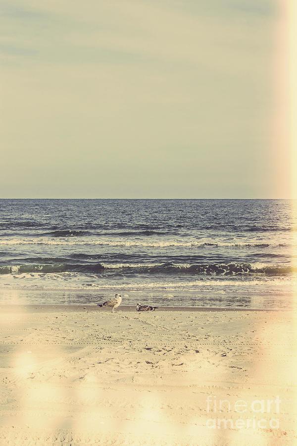Jersey Shore Photograph - If Youre A Bird Im A Bird by Colleen Kammerer