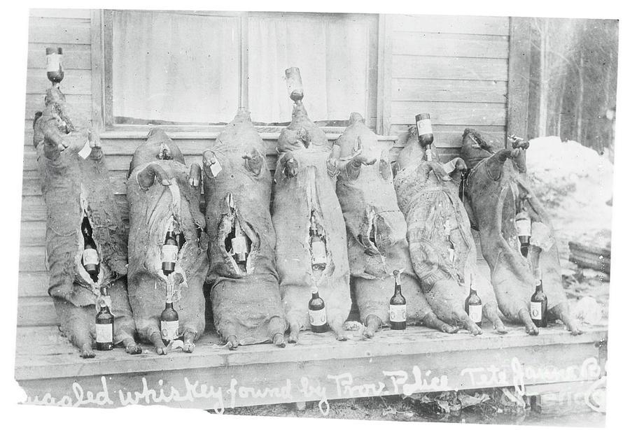 Illegal Rum Bottles Stuffed In Pigs Photograph by Bettmann