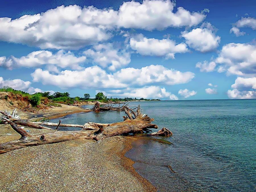 Illinois Beach State Park by Anthony Dezenzio