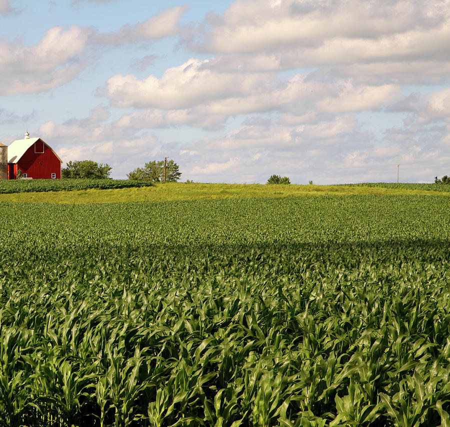 Illinois Corn Field Photograph by Jenjen42