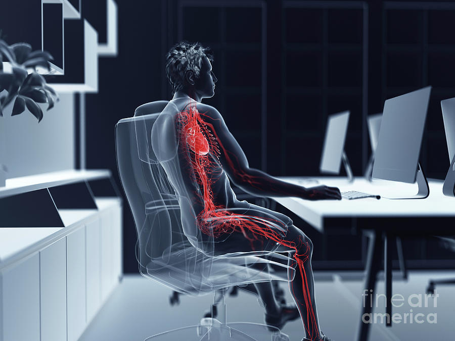 3d Photograph - Illustration Of An Office Workers Vascular System by Sebastian Kaulitzki/science Photo Library