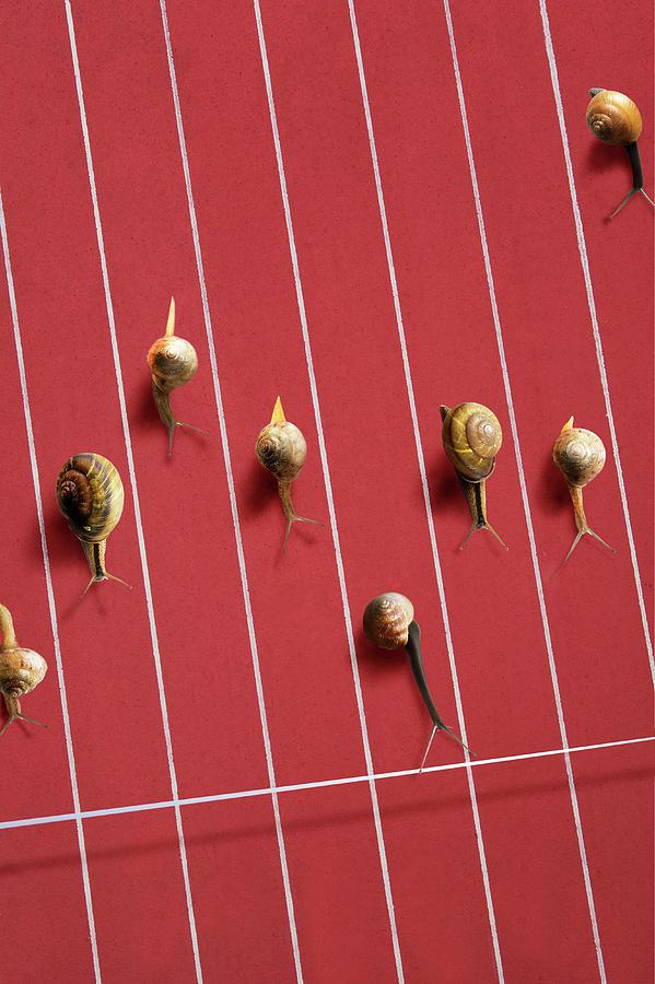Image Of Snail Photograph by Yuji Sakai