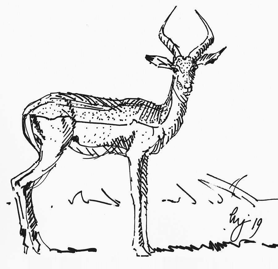 Impala antelope drawing side view by Mike Jory
