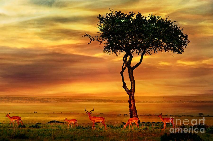 Fur Photograph - Impala At African Sunset Background by Byelikova Oksana
