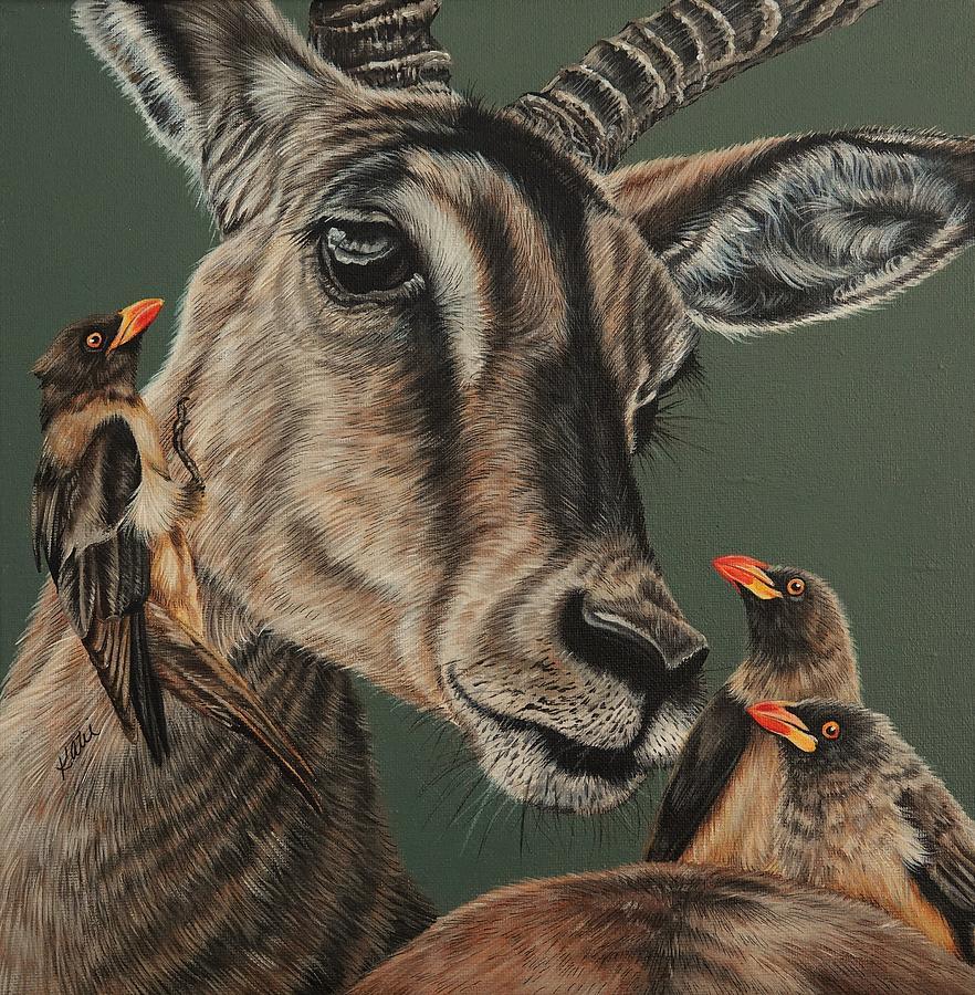 Impala by Katie McConnachie