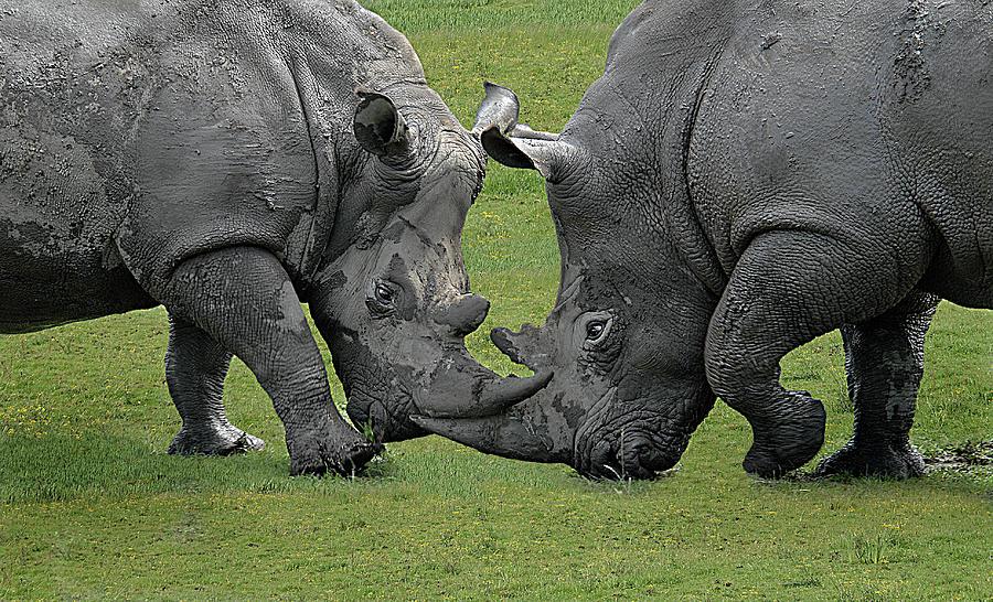 Imposing Confrontation Photograph by ©  Karolos  Trivizas
