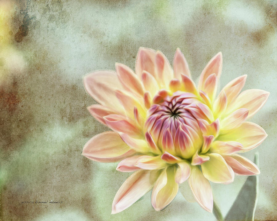 Flower Photograph - Impression Flower by Jessica Manelis
