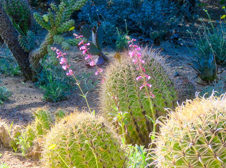 In a Cactus Garden by Judy Kennedy