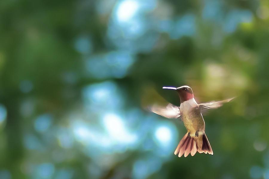 In Flight by Kelly Thackeray