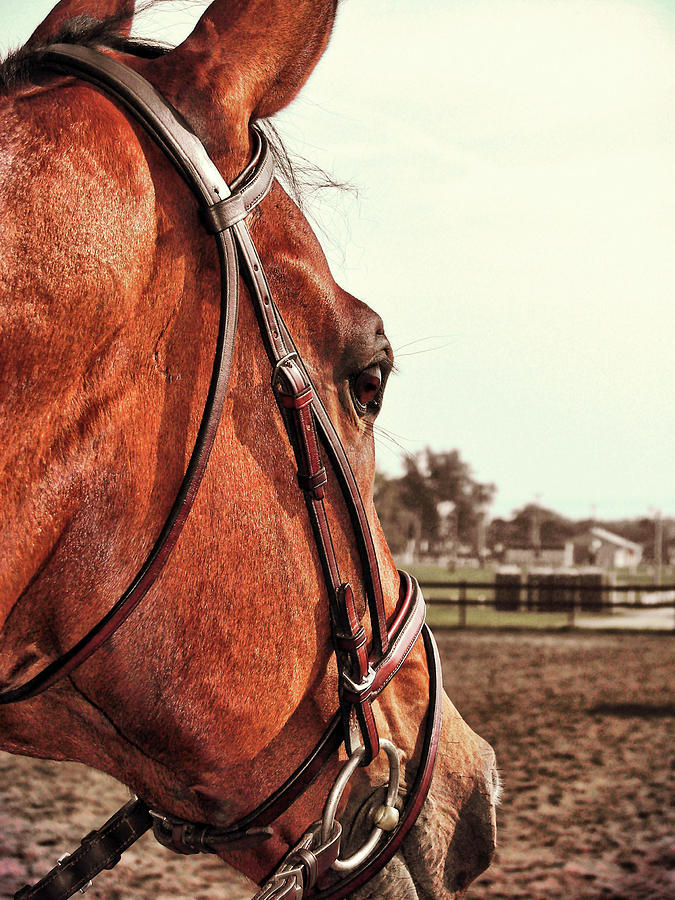 Horse Photograph - In French Chevel by JAMART Photography