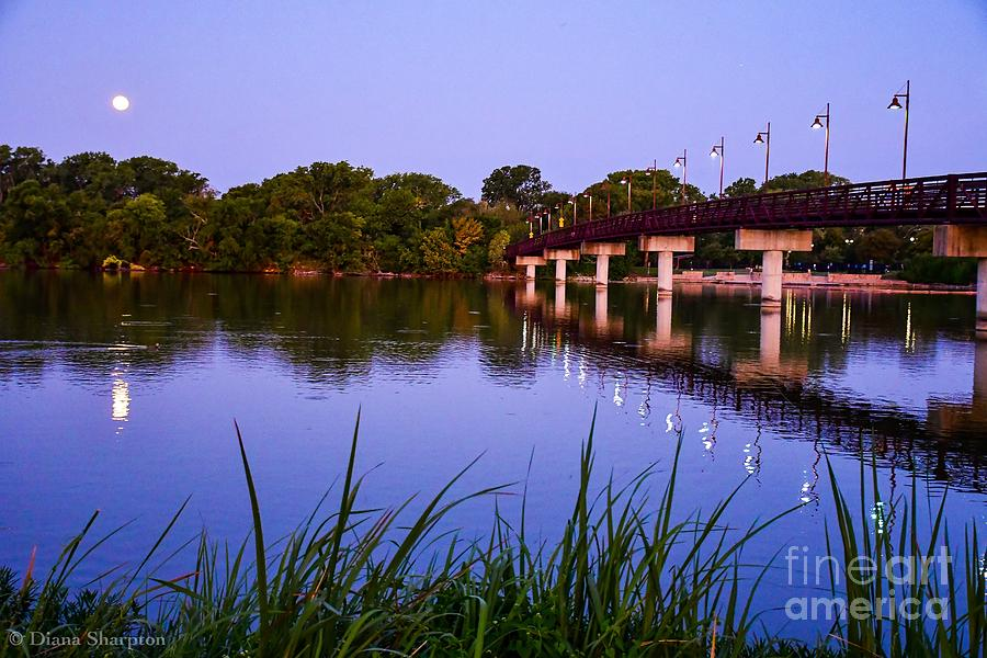 In Moon Light Predawn by Diana Mary Sharpton